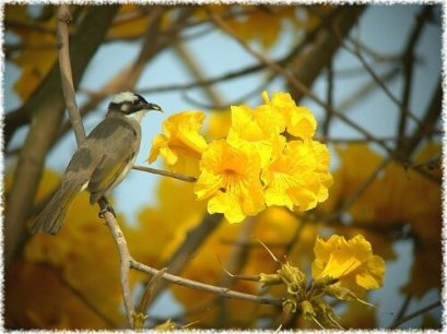 wpid-9303flower-3.jpg