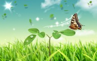 Butterfly_and_Flower